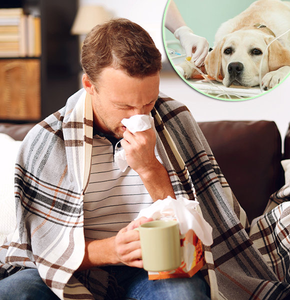 Flu Symptoms 2018 In Adults, Kids And Even Dogs – The Signs And What They Mean