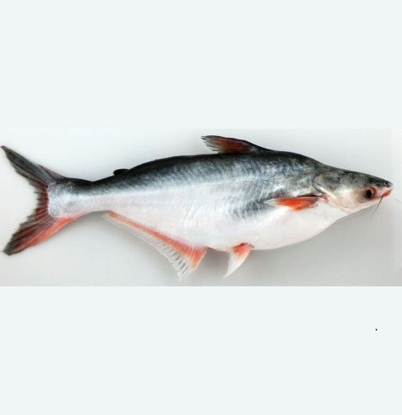 What Is Swai Fish? Find Out Its Benefits & Taste
